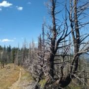 Typical trail and burned trees at top of Tronsen Ridge
