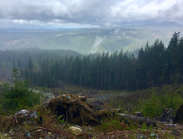 Clearcut and View towards Admiralty Inlet