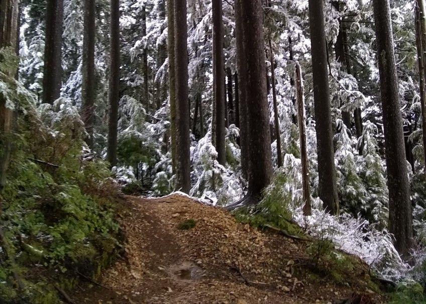 Snow  on Lower East Tiger Summit Trail