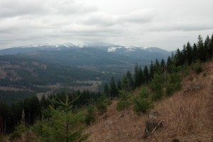 View from Clearcut